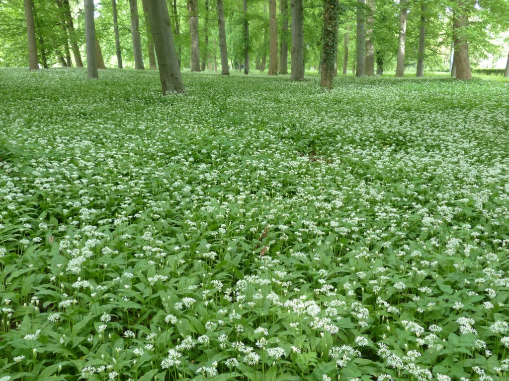 Beautiful Green Ground Cover